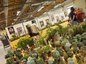 Sukulent´s exhibition